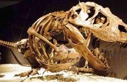 Zrekonstruowany szkielet Tyranozaura