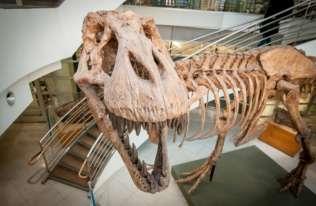 Naukowcy obliczyli, ile tyranozaurów wędrowało po Ziemi przez cały okres istnienia gatunku