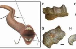 Skamieliny 12-metrowego węża morskiego znalezione w Mali