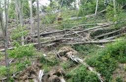 Skutki wichury w lesie