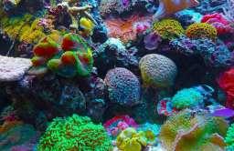 Różnokolorowe koralowce na Wielkiej Rafie Koralowej