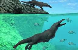 Wieloryb z nogami sprzed 42,6 mln lat