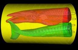 Obrazowanie skanerem komputerowym ciała wieloryba