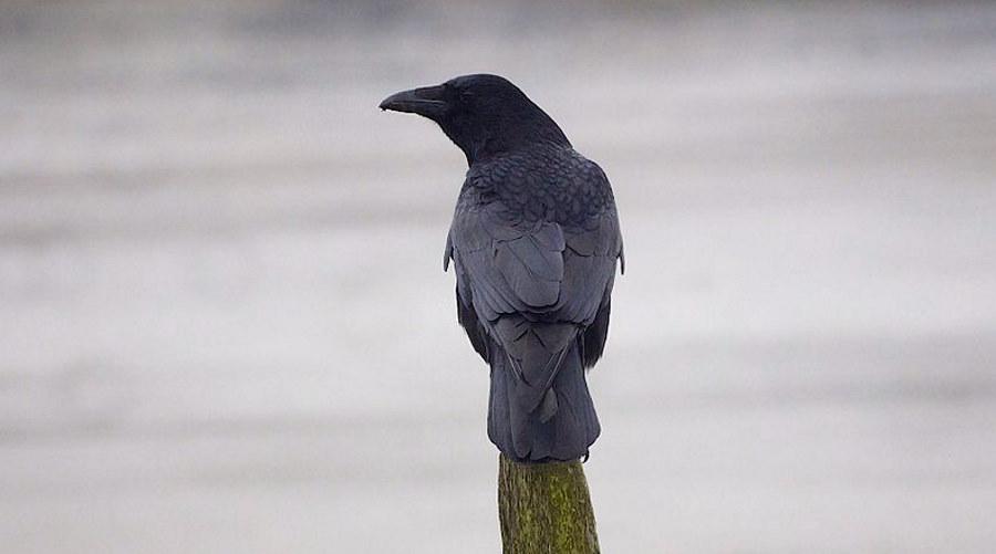 Ptaki są zdolne do świadomego myślenia? Intrygujące wyniki badań