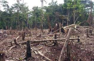 Brazylijska Amazonia emituje więcej CO2 niż pochłania. Płuca Ziemi szwankują