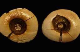 Zęby ze śladami leczenia