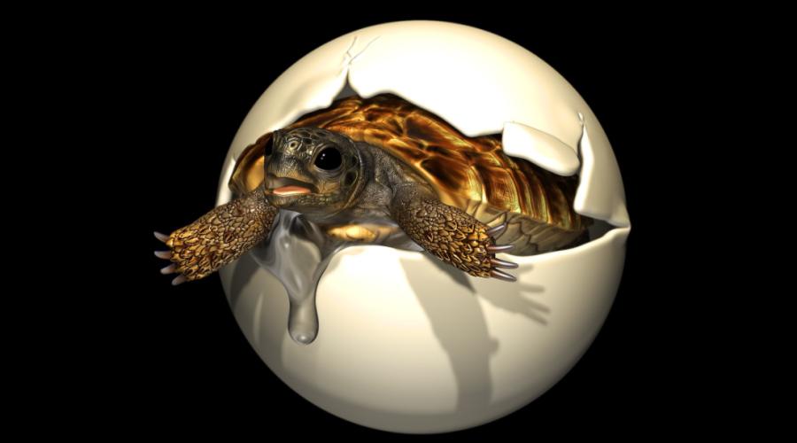 Skamieniałe jajo żółwia z okresu kredy z zarodkiem w środku