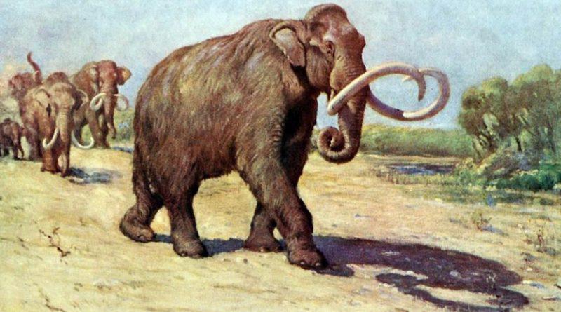 wskrzesić mamuta