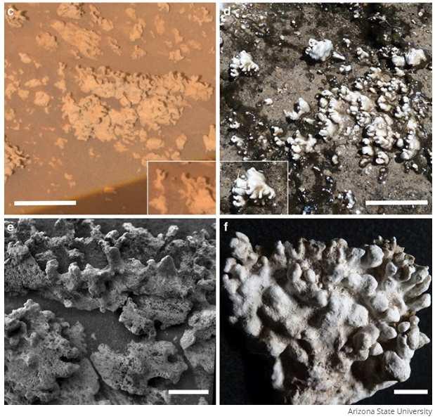 Osady krzemionkowe. Po lewej Mars, po prawej Ziemia. Fot Arizona State University