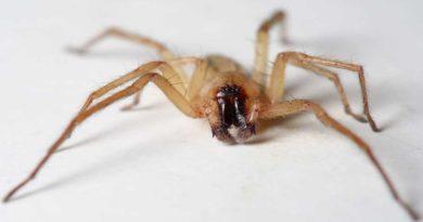 Latające pająki