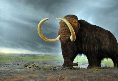 Naukowcy zamierzają wskrzesić mamuty wciągu dwóch lat