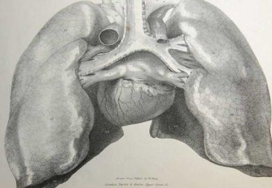 Odkryto nieznaną dotąd rolę płuc wtworzeniu krwi