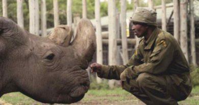 Ostatni samiec nosorożca białego północnego nie żyje